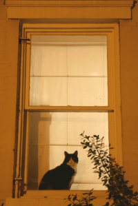 A happy cat in the Logan Circle neighborhood. (Photo by Luis Gomez, One Photograph A Day.)