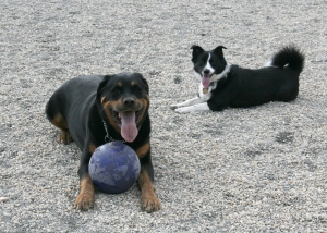 """How will I ever get the ball away from that big dog?"" (Photo: Luis Gomez, One Photograph A Day.)"