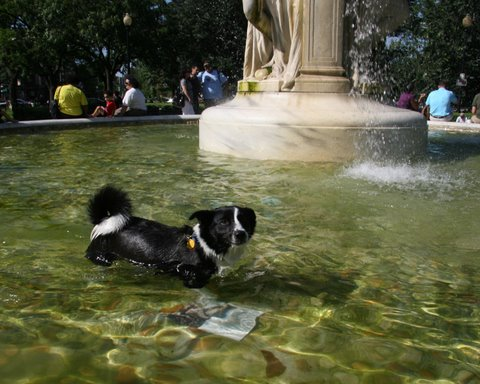The fountain in Dupont Circle.