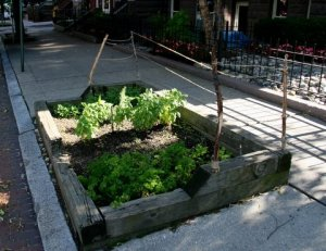 There is a nice herb garden on the 20th Street NW side of the RWDC house. (Photo: Luis Gomez.)