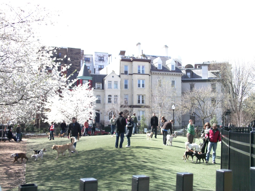 Borderstan 17th Street Dog Park